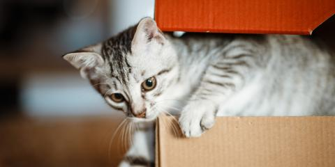 3 Reasons Your Cat Loves Sitting in Boxes, Columbia, Missouri