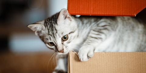 Why Do Cats Love Cardboard Boxes?, Columbia, Missouri