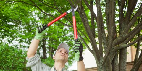 5 Tree Care Tips to Use After Professional Services, Waialua, Hawaii