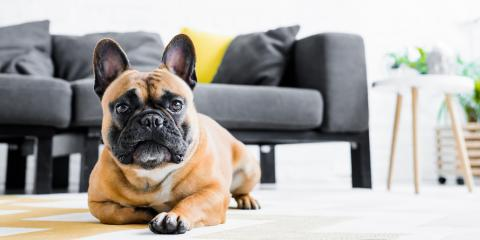 A Guide to Caring for Dogs with Allergies, Penfield, New York