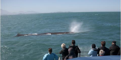 4 Interesting Facts About Humpback Whales, Ewa, Hawaii