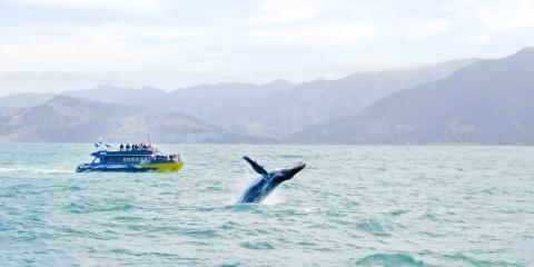 3 Whale Species You May Catch A Glimpse of Around Maui , Lahaina, Hawaii