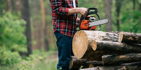 4 Reasons to Remove Old Trees on Your Property, Scottsville, New York