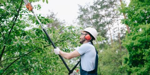 Why You Should Hire an Arborist for Tree Pruning, Nicholasville, Kentucky