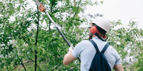 How Can You Prepare Your Trees for Tornado Season?, Midland City, Alabama