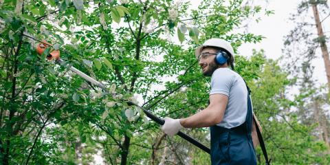 3 Reasons to Invest in Tree Trimming, Altadena, California