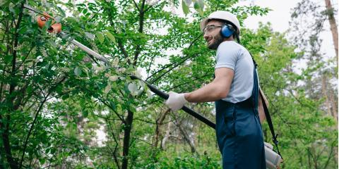 Why Should You Leave Tree Trimming to Arborists?, Millstadt, Illinois