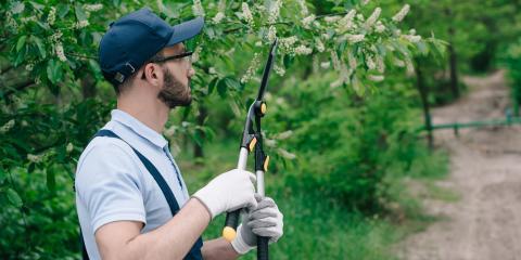 4 Easy Tree Maintenance Tips, De Motte, Indiana