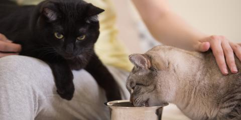 Does Your Cat Have a Digestive Issue?, Enterprise, Alabama