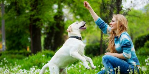 3 Signs Your Dog Needs Obedience Training, Milford, Connecticut