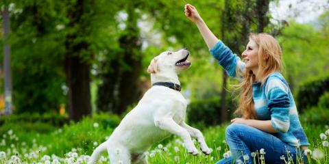 Can Dogs Get Lyme Disease? , High Point, North Carolina