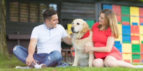 4 Advantageous Reasons to Consider Day Care for Dogs, Columbia, Missouri