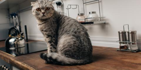 What You Should Know About Pet-Related Fires, Lincoln, Nebraska