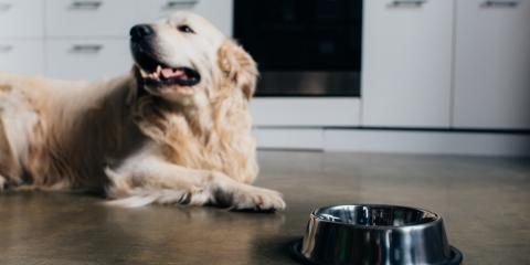 3 Home Remodeling Ideas for Pet Owners, ,