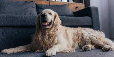 How to Keep Your Home Clean With Indoor Pets, Minneapolis, Minnesota