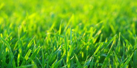 3 Reasons Lawn Aeration Is Crucial for Healthy Grass, Illinois, Arkansas