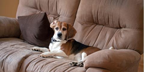 4 Ways to Keep Your Pets off the Furniture, Dothan, Alabama