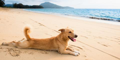 3 Essential Summertime Dog Care Tips, Ewa, Hawaii