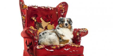 Pet Anxiety & Treatment Options: Middlefield Veterinarians Explain, Garrettsville, Ohio