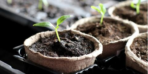 3 Tips for Gardening Indoors, Pueblo, Colorado
