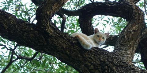Why Do Cats Like High Places?, Honolulu, Hawaii