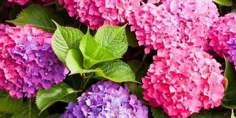 3 Beautiful Allergy-Friendly Flowers, Manhattan, New York