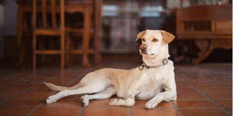 4 Best Floor Varieties for Pet Owners, Lihue, Hawaii