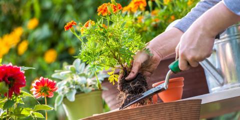 Tips for Proper Lawn Maintenance in Fall & Winter, Saltillo, Nebraska