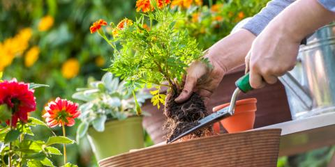 Here's How to Prepare Your Garden for Spring, Anchorage, Alaska