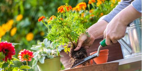 Should You Choose Annuals or Perennials for Your Spring Landscaping?, Danley, Arkansas