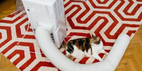 How Animals Can Harm HVAC Systems, San Marcos, Texas