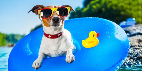 5 Ways to Keep Your Dog Cool in the Summer, Churchville, New York