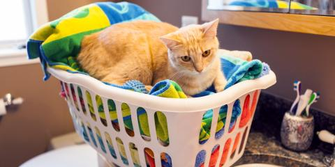 How Can You Get Pet Hair Out of Laundry?, Lincoln, Nebraska