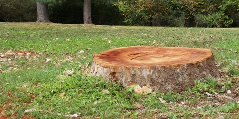 Why Remove Stumps From Your Property?, Cincinnati, Ohio