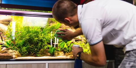 3 Tips for Storing a Household Aquarium, Anchorage, Alaska