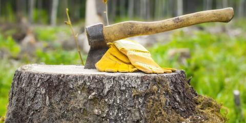 3 Reasons to Leave Tree Stump Removal to the Professionals, Guilford, Connecticut