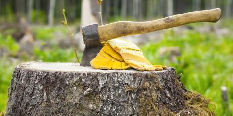 5 Benefits of Hiring a Professional for Stump Removal, Harrison, Ohio