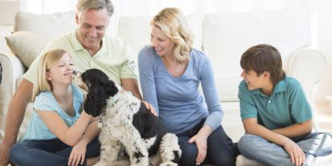 Why Pet Owners Need More Frequent Visits From the Carpet Cleaners, Rochester, New York