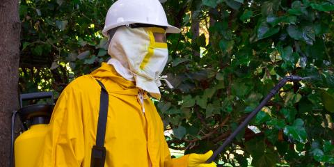 What Does Termite Fumigation Entail?, Wahiawa, Hawaii