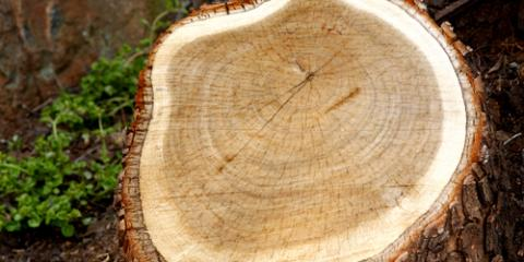 3 Reasons You Need Immediate Stump Removal, Wood River, Illinois