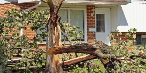 Tree Removal Advice: How to Handle a Fallen Tree, Scottsville, New York
