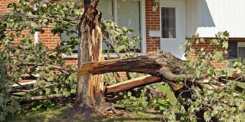 3 Situations Requiring Emergency Tree Service, Milton, Pennsylvania