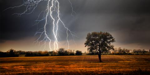 3 Ways Your Tree Service Can Prevent Lightning Damage, Nicholasville, Kentucky