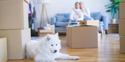 3 Ways to Help Your Dog Adjust After Your Move , Foley, Alabama