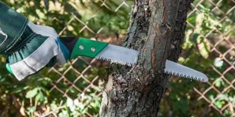What Is Tree Pruning & Why Do You Need It?, Macedon, New York