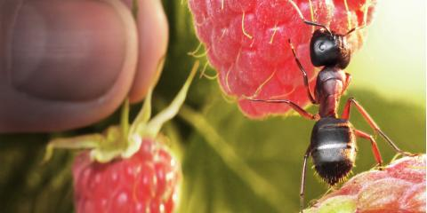 4 DIY Tips to Control Ants , Mobile, Alabama