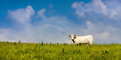 Why You Should Only Eat Grass-Fed Beef, Ewa, Hawaii