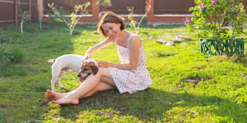 3 Pest Control Tips for Pet Owners, North Hobbs, New Mexico