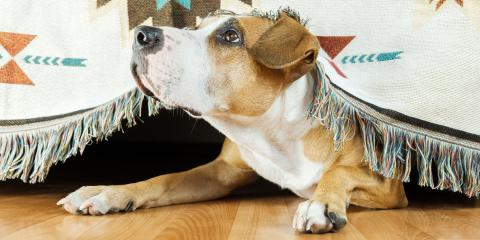 4 Signs of Anxiety in Dogs, Nicholasville, Kentucky