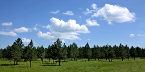 Why You Should Hire Professionals for Land Management, Camden, Arkansas